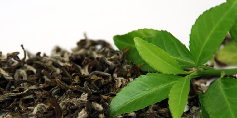 il caffè al tè verde funziona per dimagrire